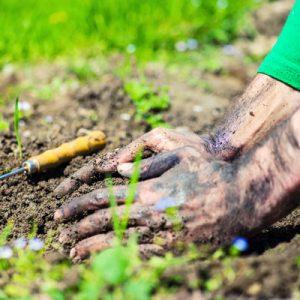 Crop Management Plans